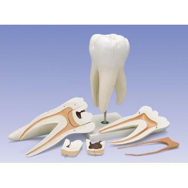 Зубы купить в интернет-магазине АЛВИМЕДИКА Украина