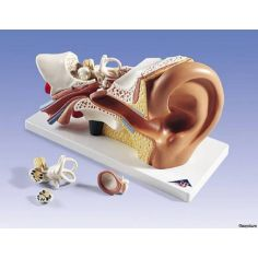 Ухо, горло, нос купить в интернет-магазине АЛВИМЕДИКА Украина